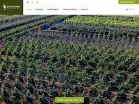 Ruud van den Berk - Vormboomkwekerij
