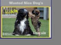 Wanted Nice Dog's Tibetaanse Terrier