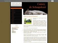Brits Korthaar Cattery de Schaapskooi